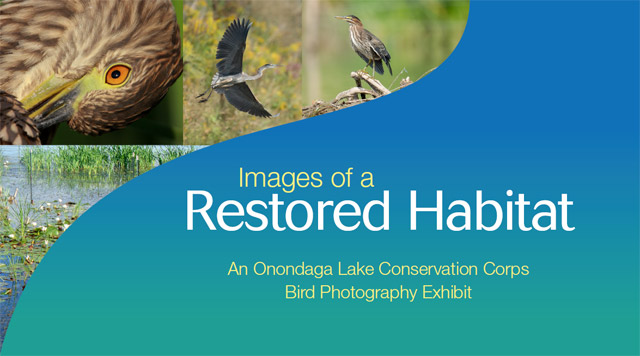 Create a Home for Wildlife on Onondaga Lake's Western Shoreline